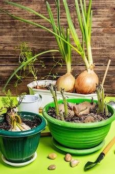 Concept de plantation et de jardinage de printemps. outils, arrosoir, pots de fleurs, seaux, pierres décoratives.