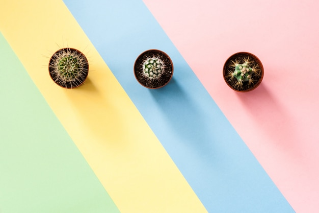 Concept plat laïque avec trois cactus verts sur fond multicolore diagonal rayé.