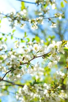 Concept de printemps des arbres en fleurs, fertilité et restauration naturelle