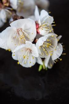 Concept de printemps avec la floraison des pêches
