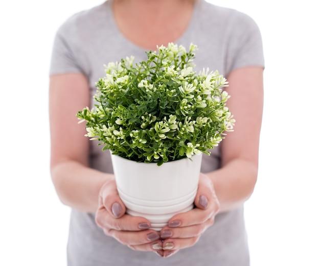 Concept de printemps - gros plan d'une plante en pot dans les mains des femmes isolées sur fond blanc