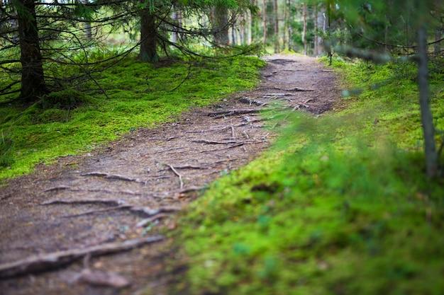 Concept de randonnée - sentier pédestre en forêt