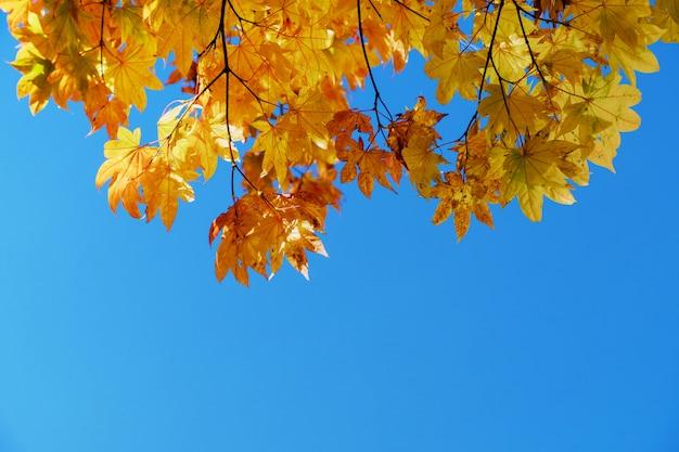 Concept de la saison d'automne et d'automne, regardez au-dessus du ciel tiré