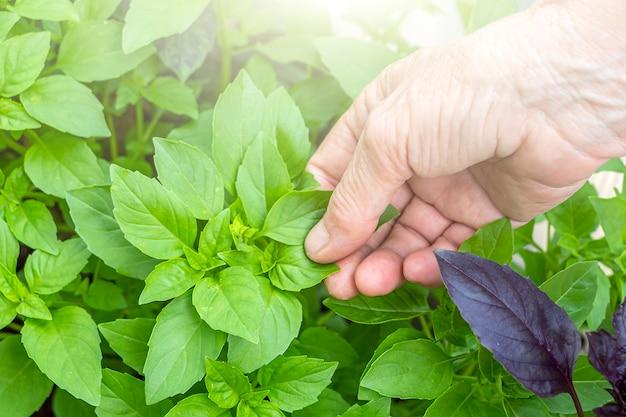 Concept sans ogm, jardinage, agriculture et ogm.