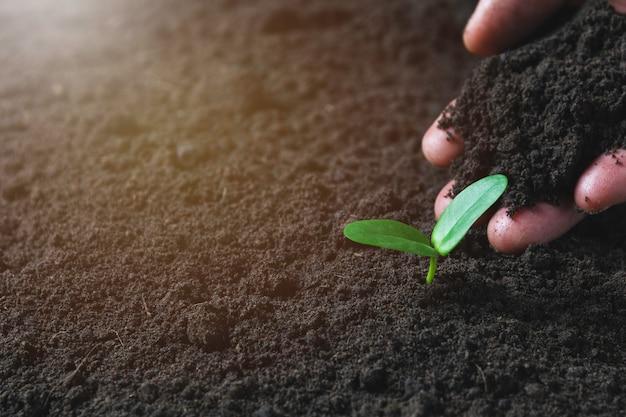 Concept de semis à la main humaine avec jeune arbre