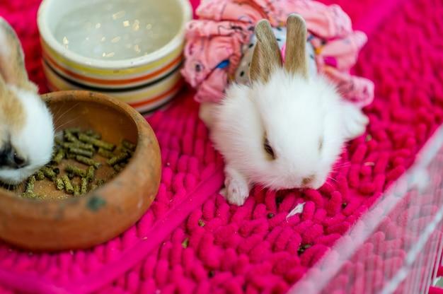 Concept de soins pour animaux de compagnie mignon petit lapin blanc avec espace de copie