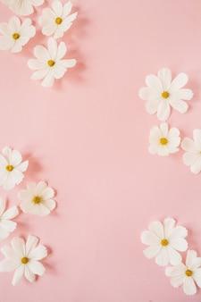 Concept de style minimal. fleurs de camomille marguerite blanche sur rose pâle. mode de vie créatif, été, concept de printemps