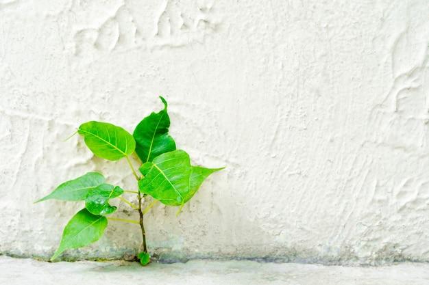 Concept de survivant. petit arbre de croissance sur un sol en béton avec mur.