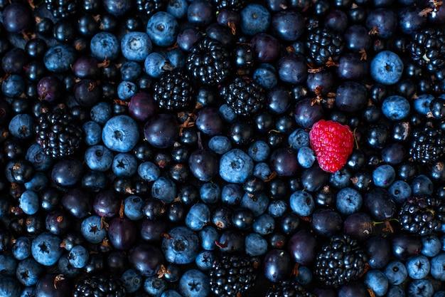 Concept d'unicité. pas comme les autres. framboise rouge dans un mélange de fruits noirs de cassis et de myrtille