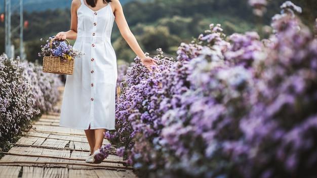 Concept de vacances de détente de voyage d'hiver, jeune femme asiatique de voyageur heureux avec la robe faisant du tourisme sur le champ de fleurs de margaret aster dans le jardin à chiang mai, thaïlande