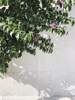 Concept de verdure minimal. belle plante verte exotique contre le mur blanc