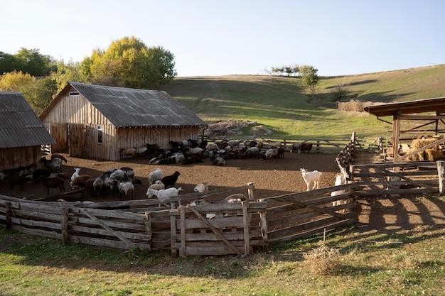 Concept de vie rurale avec des animaux de la ferme