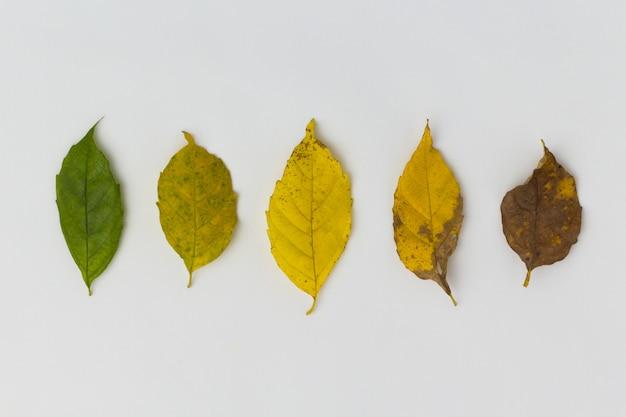 Concept de vieillissement, différentes étapes de la vie