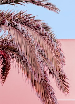 Conception de couleurs pastel tropicales de palmier. les îles canaries. ambiance de voyage