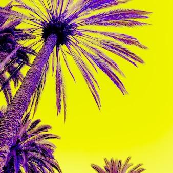 Conception créative tropicale de palmier. concept de voyage de plage