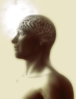 La conception du cerveau humain