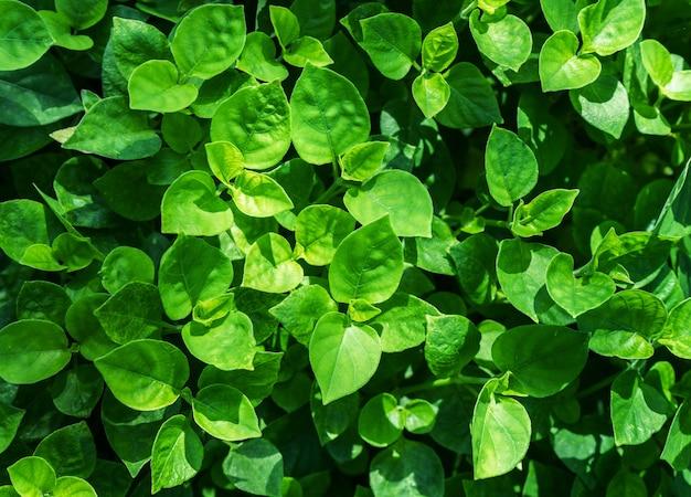 Conception de feuilles vertes