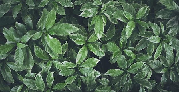 Conception de fond de feuilles vertes.plat lay.top view of leaf.nature concepts