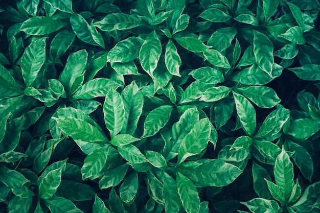 Conception de fond de feuilles vertes