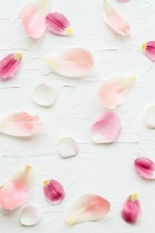 Conception de fond de pétales de fleurs colorées