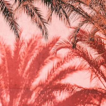 Conception de mode de paume. plantes sur rose. ombre. création minimale