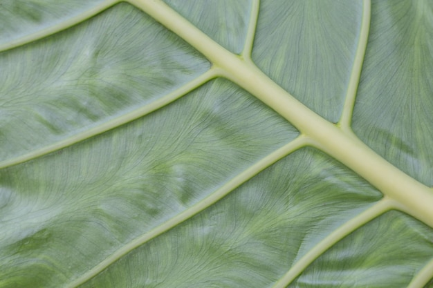 Conception et motif de feuille verte.