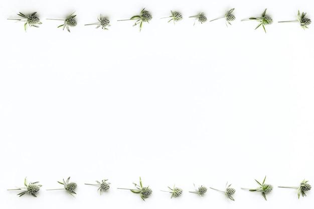 Conception de la reine des alpes sur fond blanc