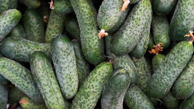 Concombres, légumes biologiques frais