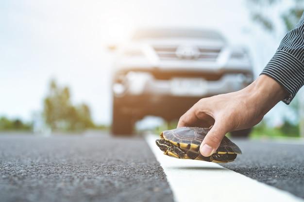 Le conducteur arrête la voiture et aide la tortue sur la route