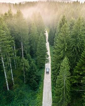 Conduire dans la forêt à la recherche de lumière