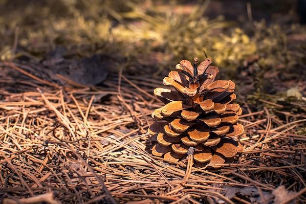 Cône de pin dans la forêt par une journée ensoleillée