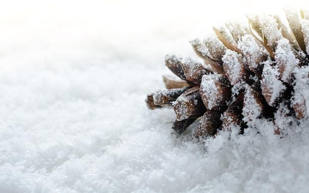 Cône de pin givré dans la neige. fond d'hiver et de noël