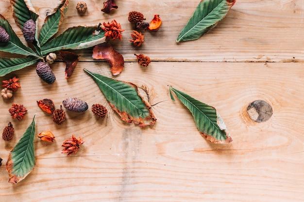 Cônes d'aulne avec des feuilles