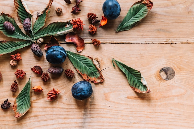 Cônes d'aulne parmi les feuilles et les prunes