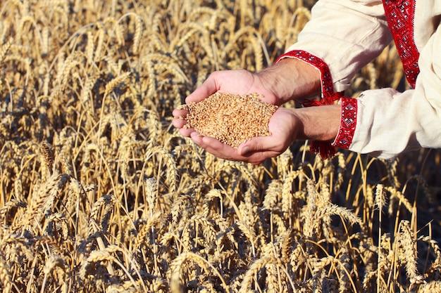 Cônes à la main sur la nouvelle récolte