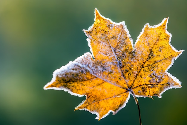 Congé d'automne orange saisonnier avec du givre autour des courbes symbolisant l'hiver.
