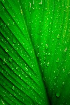 Congé vert avec gouttes de rosée gouttes fraîches nature papier peint