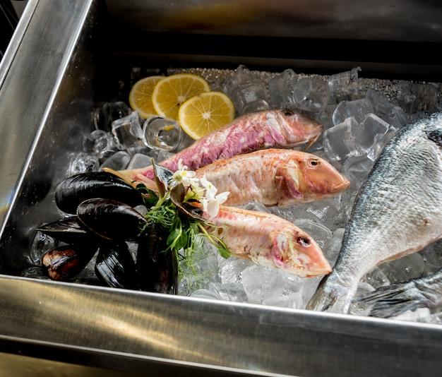Congelés voir de la nourriture sur la glace. crevettes, poissons et coquillages. limes et glace sur fond métallique