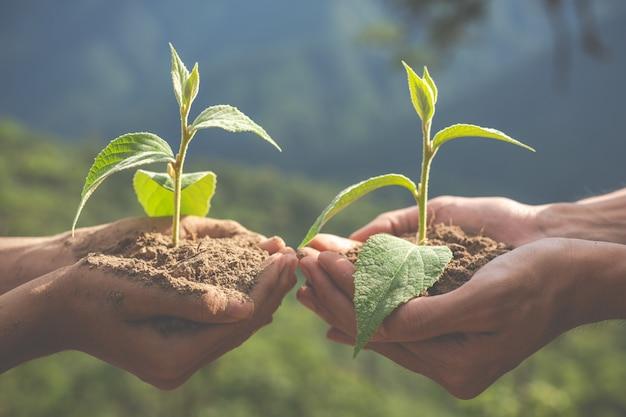 Conservation de l'environnement dans le jardin pour les enfants.