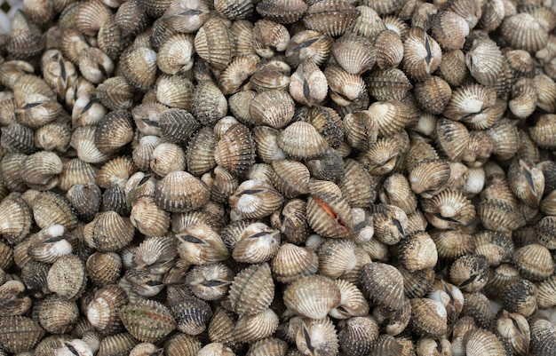 Conservez les coquillages sur la glace pour les fruits de mer