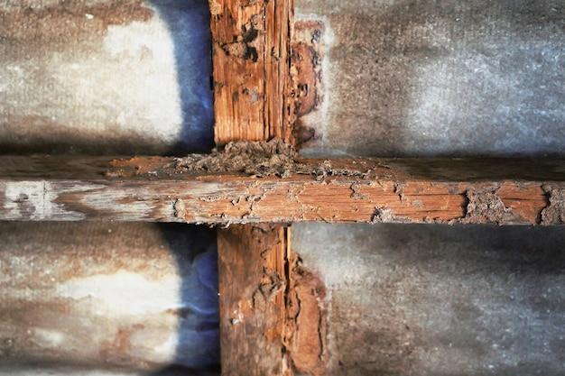 Construction de maison avec dégâts de termites