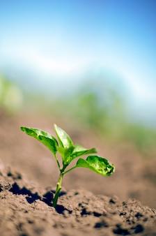 Construire un nouveau concept de vie et de stat up. la jeune plante se développe sur l'environnement vert et le soleil