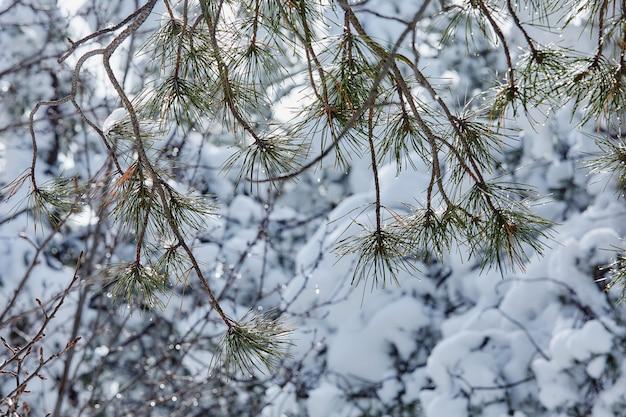 Conte de fées d'hiver à la recherche de la beauté de la tempête de neige