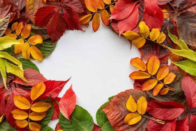 Contexte créatif de la nature. feuilles jaunes, rouges, orange et vertes. style de minimalisme.