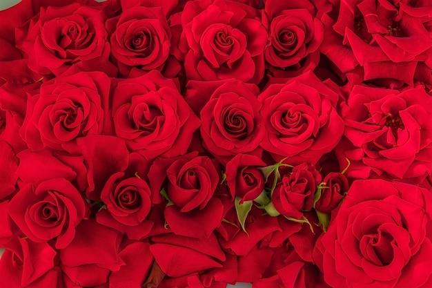 Contexte festif de nombreux bourgeons de roses rouges