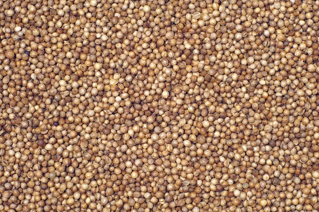 Contexte des grains de coriandre