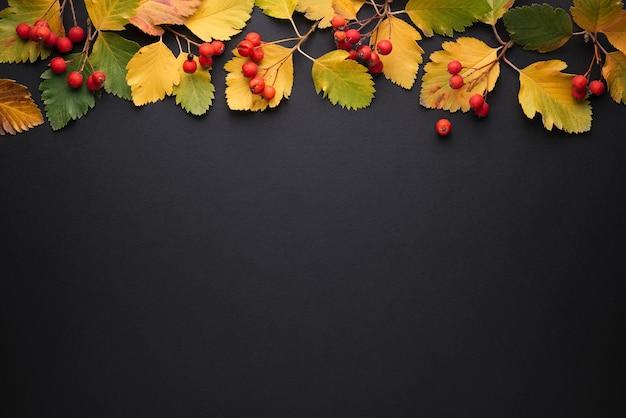 Contexte des promotions et remises d'automne. feuillage d'automne jaune et baies sur fond noir