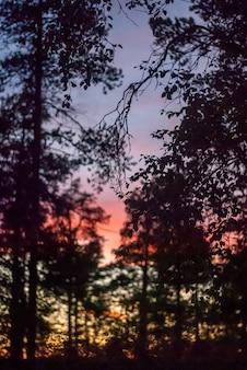 Contours d'arbres forestiers sur un coucher de soleil lumineux