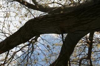 Contrairement arbre