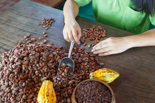 Contrôle manuel de la qualité des fèves de cacao